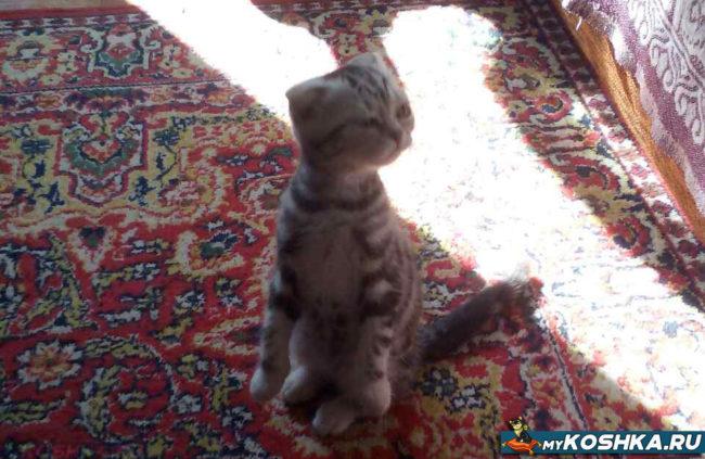 Умный и сильный котёнок