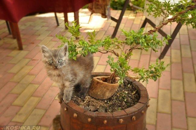Серый пушистый котенок сидит на горшке с зелёным цветком