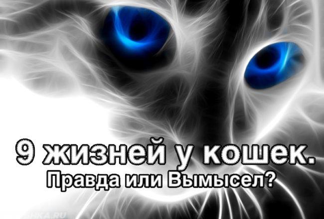 9 жизней у кошки: правда или вымысел