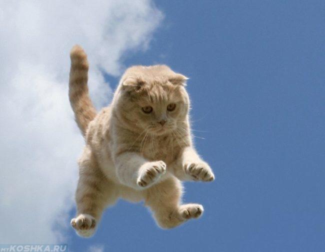 Рыжий кот летит с высоты когти выпущены