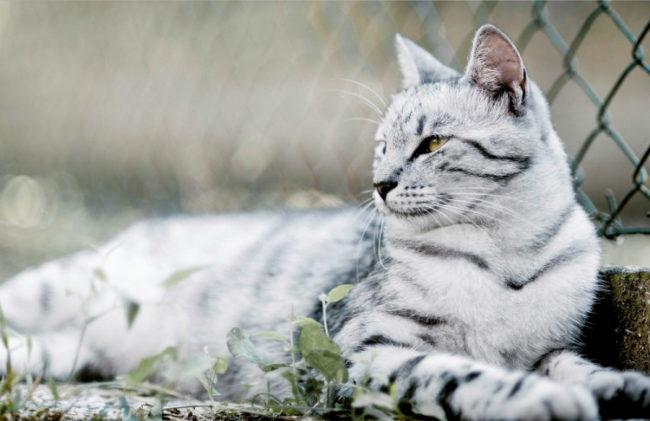 Разноцветный кот грациозно лежит