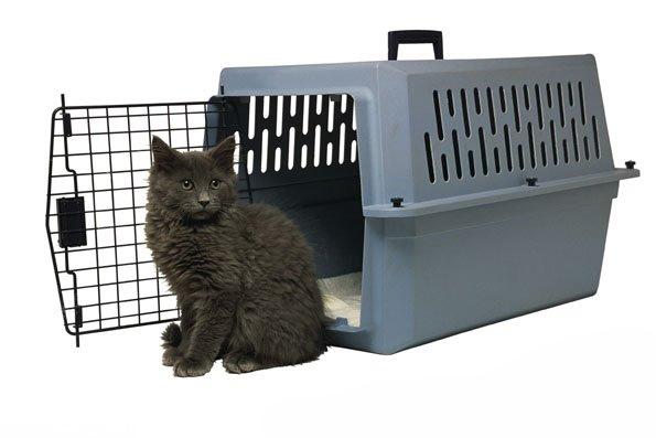 Серый кот сидит возле синего контейнера
