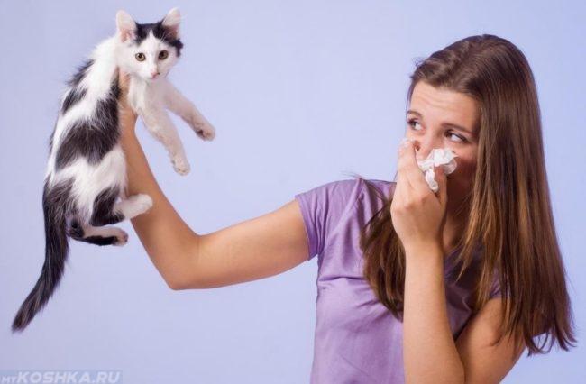 Аллергия у женщины на котёнка