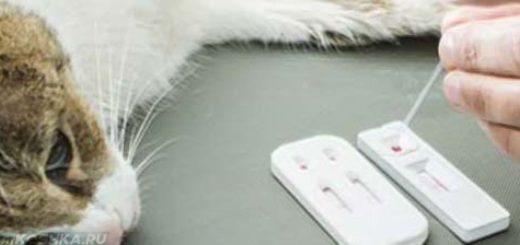 Анализ крови на ЛДГ у кошки