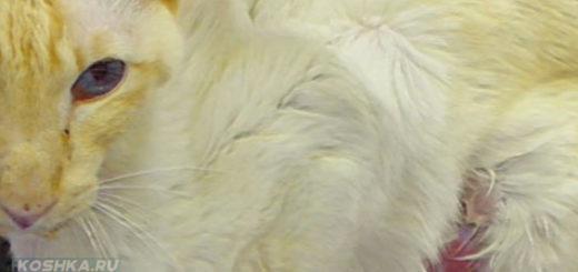 Анорексия у кошки