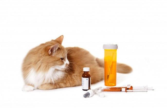 Антибиотики для кота и рыжий пушистый кот на белом фоне