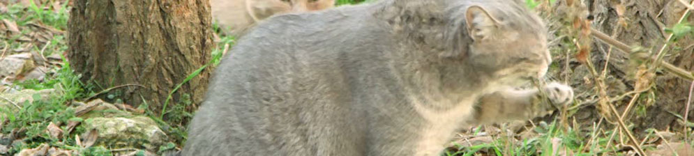 Кошка ест траву богатую витаминами