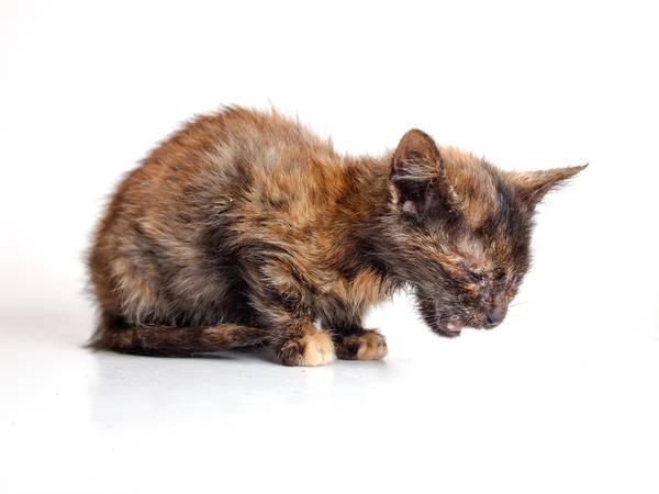 Инфекционное заболевание у кота