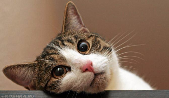 У кота судороги в задних лапах