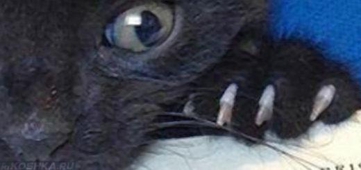 Чёрный кот кусает сонник