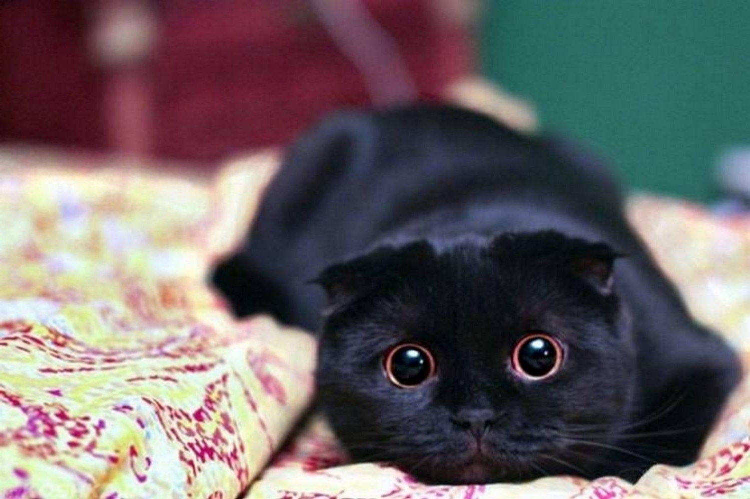 Сон укусил чёрный кот