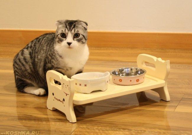 Чистые миски у серой с белым кошки