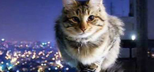 Кот испытывает судьбу сидя на парапете