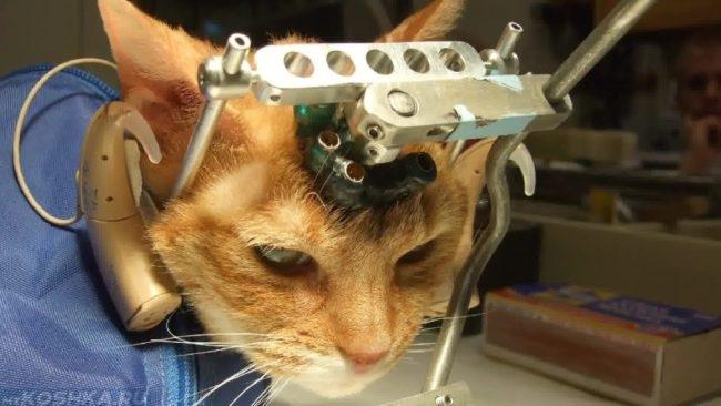 Диагностика мозга рыжего кота