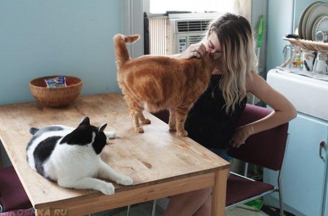 Две кошки на кухонном столе рядом с хозяйкой