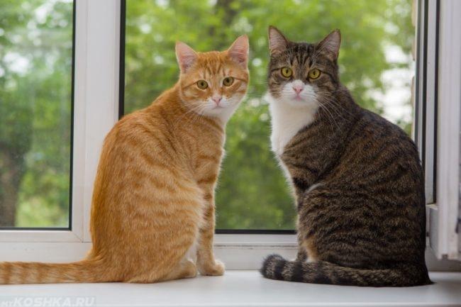 Два кота на белом подоконнике