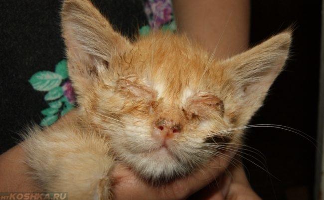 Инфекционная болезнь у рыжего кота
