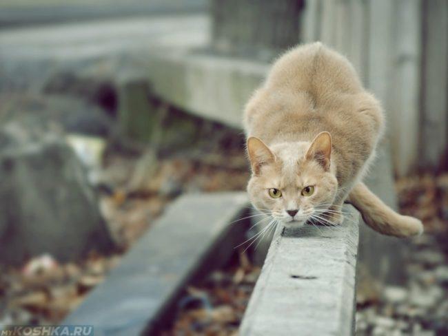 Инстинкт охоты у рыжего кота