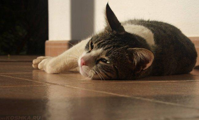 У кота пена изо рта судороги