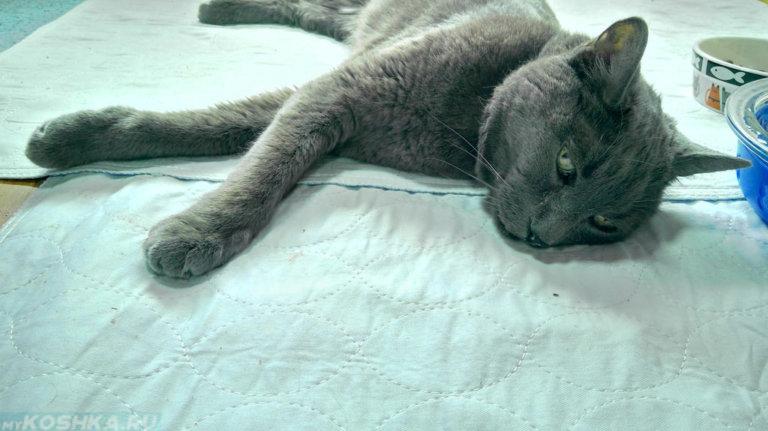 всей у кота урчит в животе что это Селфи-палки кредит или