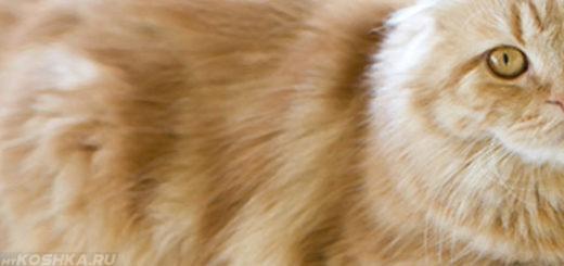 Кошка больная гломерулонефритом