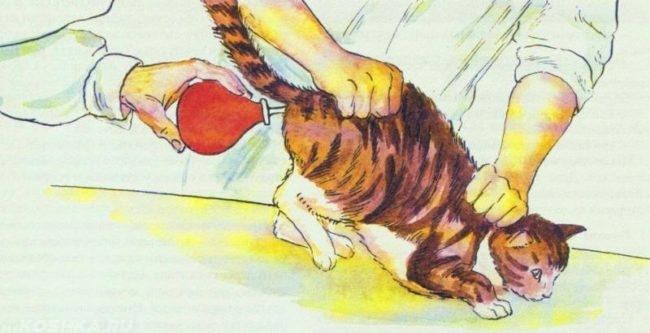 Красная клизма и полосатый кот на рисунке
