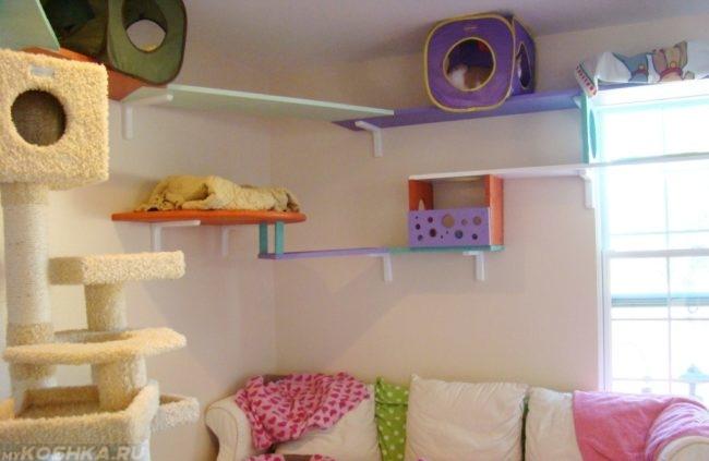 Комната для вязки кошек