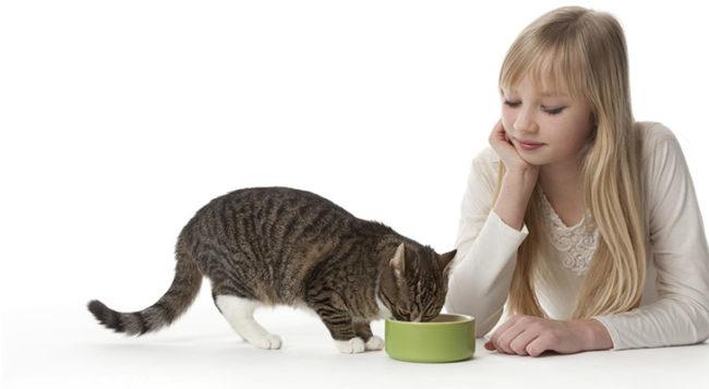 Кормление кота из зелёной миски и хозяйка на белом фоне