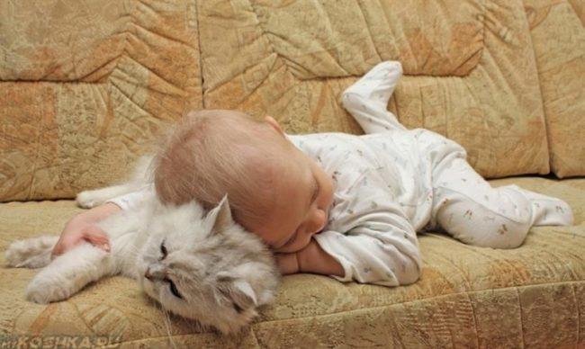 Невская маскарадная кошка и ребёнок