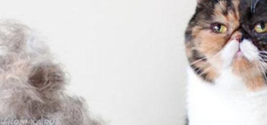 Кошка линяет много шерсти