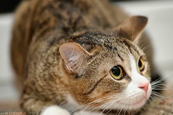 Разноцветная кошка в страхе прилегла