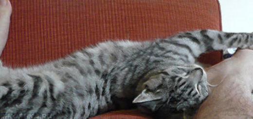 Кошка спит в ногах у человека