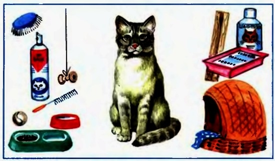 Перечень необходимого инвентаря для содержания кошек