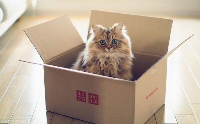 Пушистая кошка сидит в коробке
