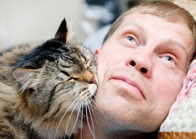 Кошка целует хозяина в щеку