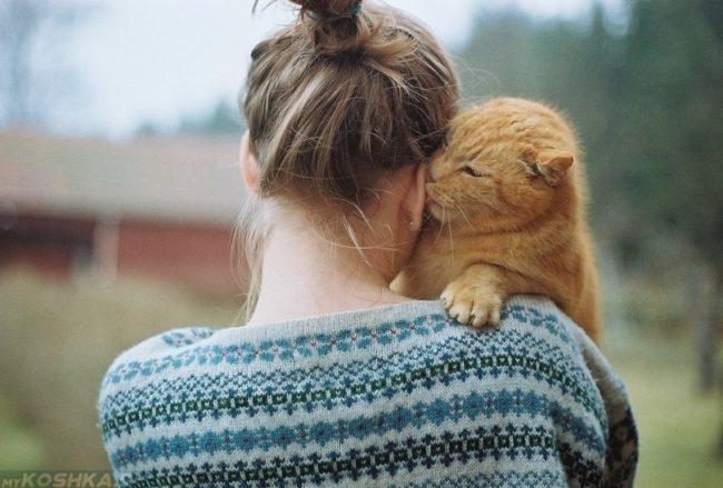 Рыжий кот на руках у девушки