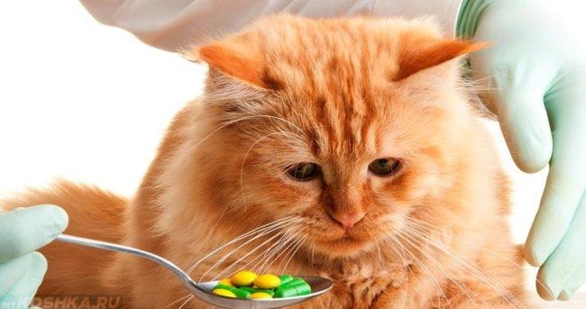 Рыжий кот смотрит на ложку с таблетками