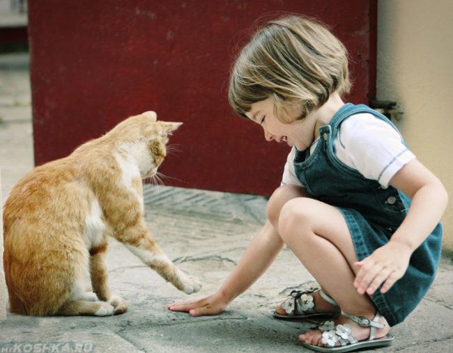 Рыжий кот играет с маленькой девочкой