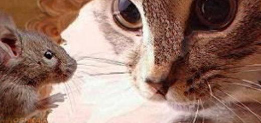 Кот смотрит на мышь в дыре в стене