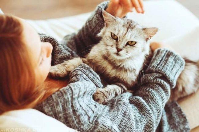 Серый пушистый кот на хозяйке