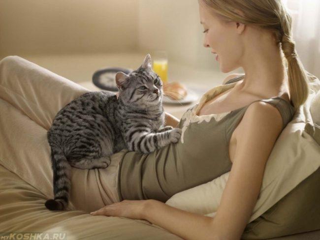 Серый кот мурлыкающий на хозяйке