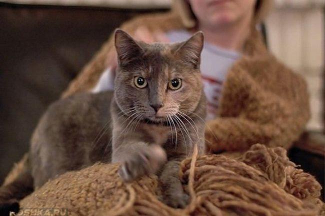 Серый кот на хозяйке укутанной в теплый платок