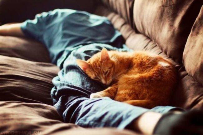 Рыжий спит на ногах хозяина
