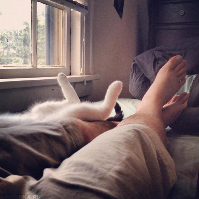 Белый кот лежит в ногах