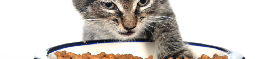 Котёнок отодвигает лапой сухой корм