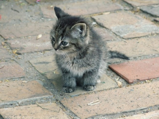 Пушистый серый котенок на улице