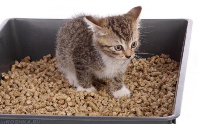 Пушистый котенок в лотке с древесным наполнителем