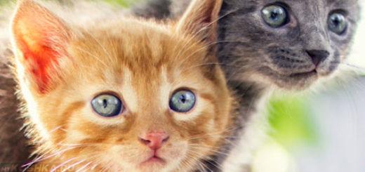 Два котёнка с коронавирусом