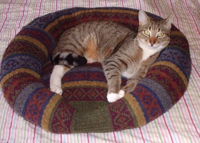 Коричневый полосатый кот лежащий на лежанке