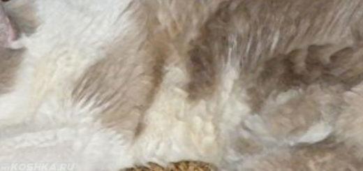 Кошка больная лейкемией